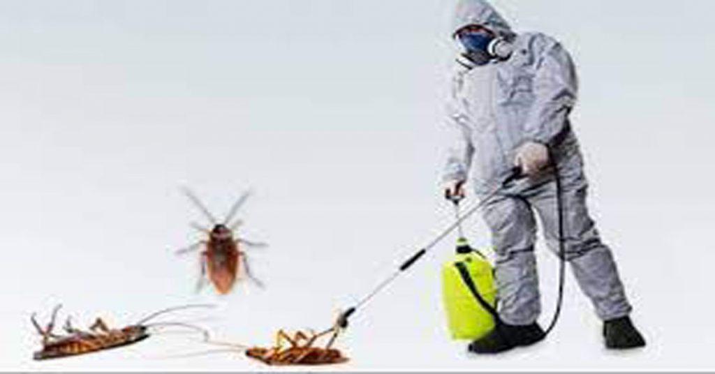 افضل شركة مكافحة حشرات بالخرج