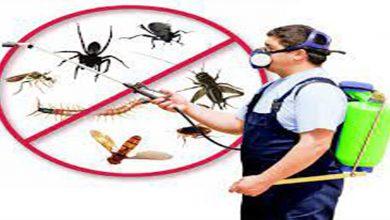 افضل شركة مكافحة حشرات بالدوادمي