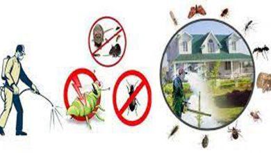 افضل شركة مكافحة حشرات بالمزاحمية